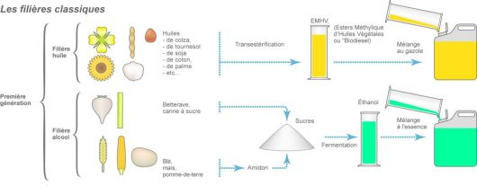 Les filières classiques biocarburants première génération
