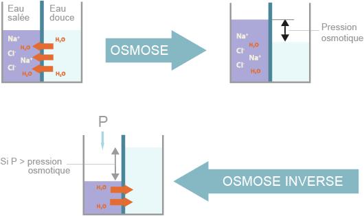 Principe de l'osmose et de l'osmose inverse (©2012)