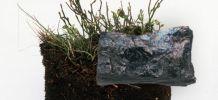 Charbon lignite